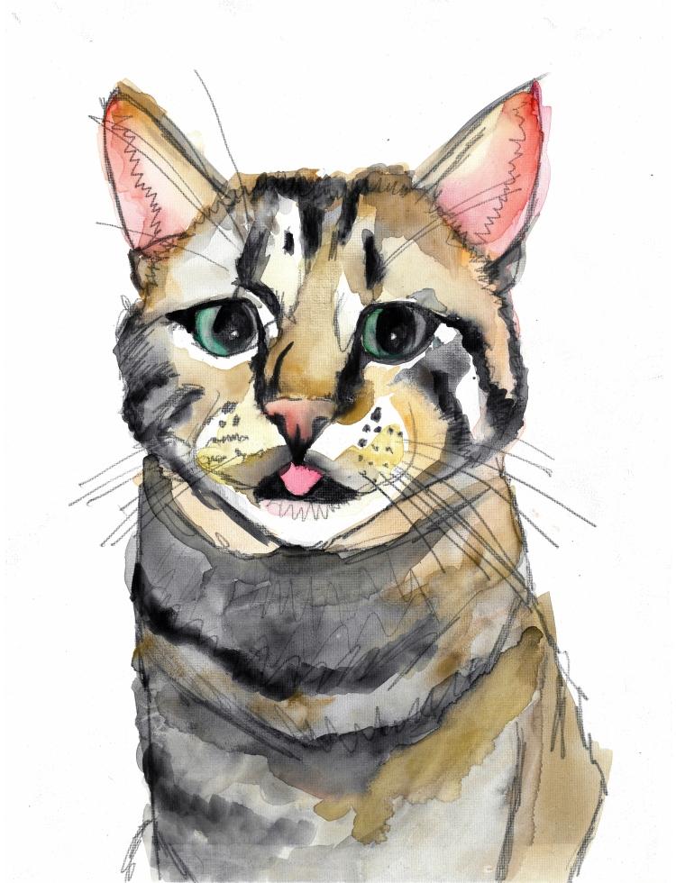 cat for jo